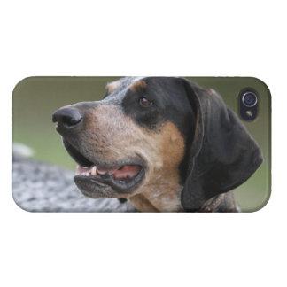 Coonhound iPhone 4/4S Case