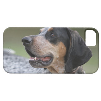 Coonhound iPhone 5/5S Cover
