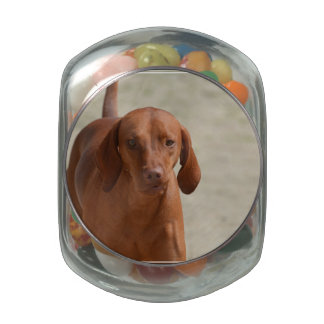 Coonhound Jelly Belly Candy Jars