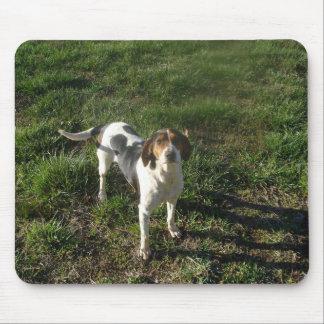 Coonhound Mousepad del caminante de Treeing