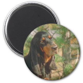 Coonhound negro y del moreno iman de nevera