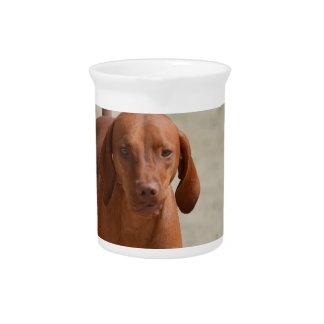 Coonhound Pitcher