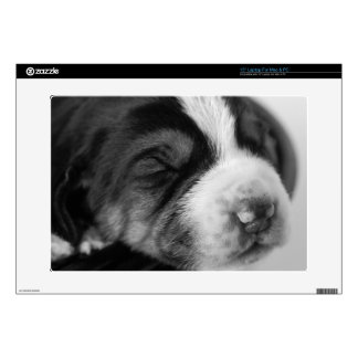 Coonhound Puppy Decal For Laptop