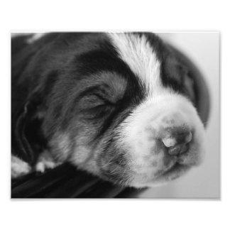 Coonhound Puppy Art Photo