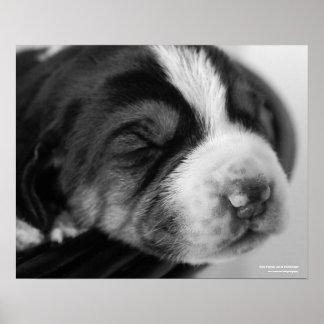 Coonhound Puppy Print
