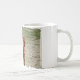 Coonhound rojo taza