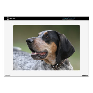 Coonhound Decal For Laptop