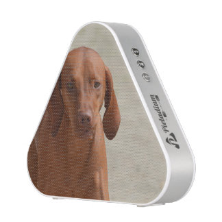 Coonhound Speaker