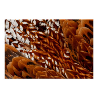 Cooper Pheasant Feather Pattern Poster