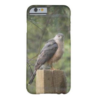 Cooper s Hawk iPhone 6 Case