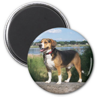 Cooper The Wonder Beagle Magnet On The Lake