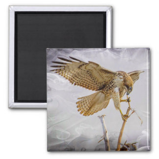 Coopers Hawk 2 Inch Square Magnet