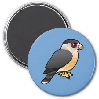 Cooper's Hawk 3 Inch Round Magnet
