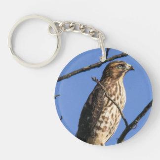 Cooper's Hawk Acrylic Key Chains