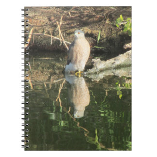 Cooper's Hawk at the Water's Edge Notebook