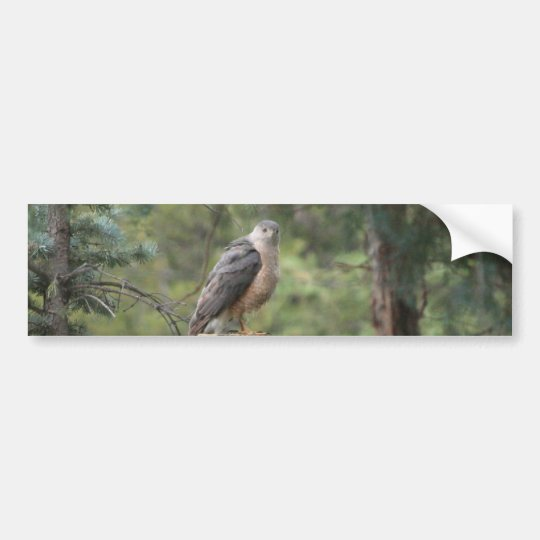 Cooper's Hawk Bumper Sticker