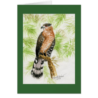 """Coopers Hawk"" Card"