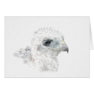 Coopers Hawk Chick Card