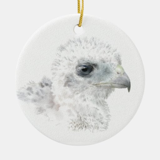 Coopers Hawk Chick Christmas Ornament