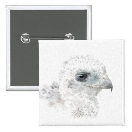 Coopers Hawk Chick Pinback Buttons