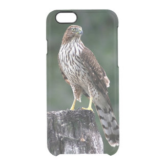Coopers Hawk Clear iPhone 6/6S Case