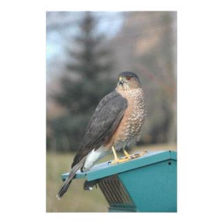 Coopers Hawk Flyer