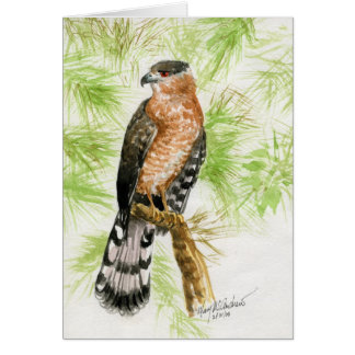 """""""Coopers Hawk"""" Greeting Cards"""
