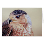 Coopers Hawk Greeting Cards