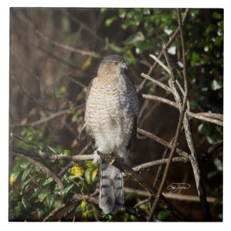 Coopers Hawk In the Morning Sunshine Man Cave Ceramic Tile