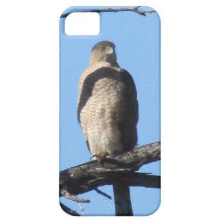 Cooper's Hawk iPhone 5 Case