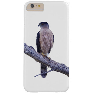 Cooper's Hawk iPhone 6 Plus case
