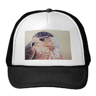 Coopers Hawk Mesh Hats