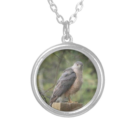 Cooper's Hawk Necklace