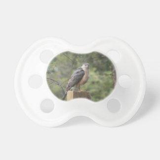 Cooper's Hawk Pacifier
