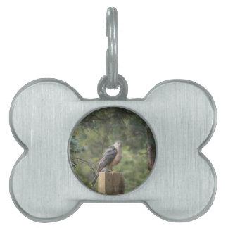 Cooper's Hawk Pet Tag