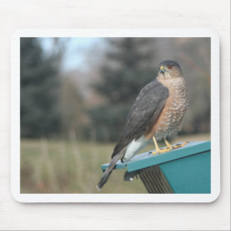Cooper's Hawk photo Mouse Pad