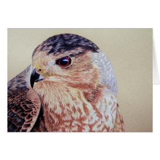 Coopers Hawk Portrait Card