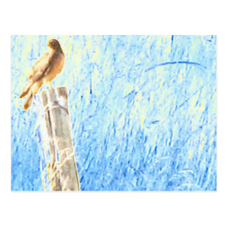 Cooper's Hawk, Powell Butte Postcard