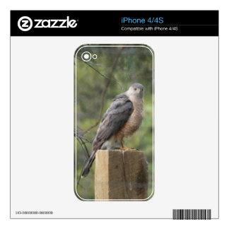 Cooper's Hawk Skins For The iPhone 4