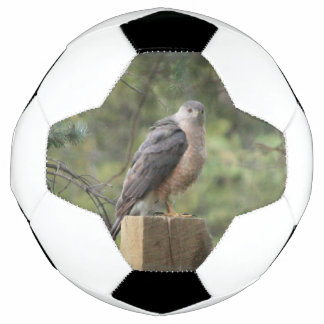 Cooper's Hawk Soccer Ball