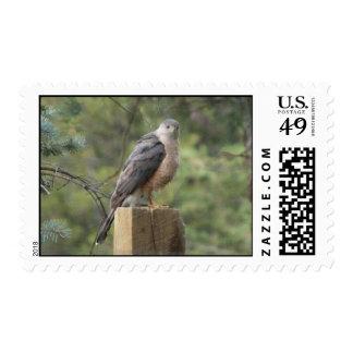 Cooper's Hawk Stamp