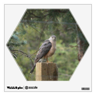 Cooper's Hawk Wall Decal