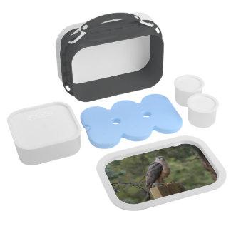 Cooper's Hawk Yubo Lunch Box
