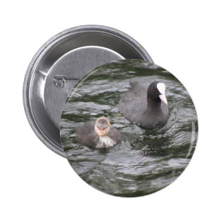 Coot and Chick Button