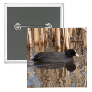 Coot Button