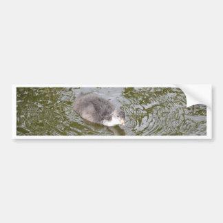 Coot Chick Bumper Sticker