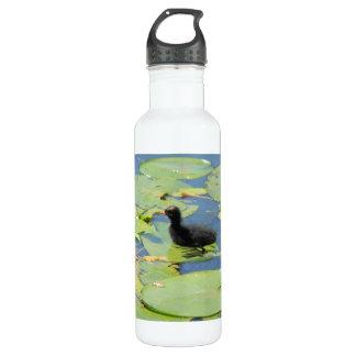 coot fledgling water bottle