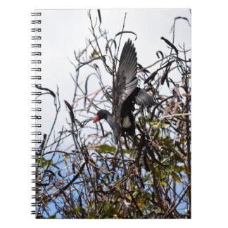 COOT IN FLIGHT IN RURAL QUEENSLAND AUSTRALIA NOTEBOOK
