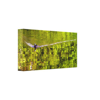 Coot in green water canvas print