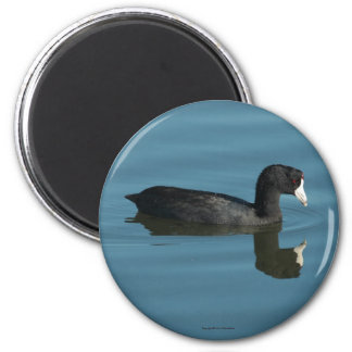 Coot Magnet